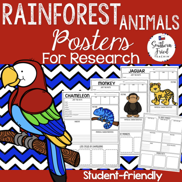 rainforest animals research projects